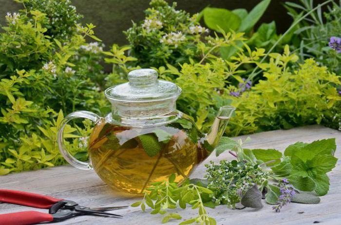 Травяные сборы при гастрите с повышенной кислотностью