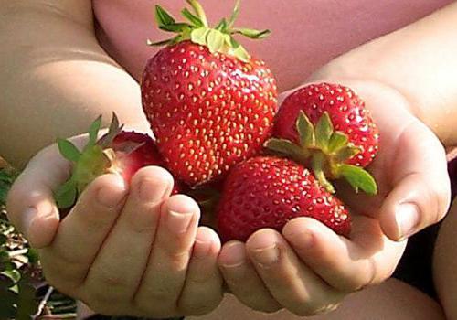 можно клубнику при сахарном диабете 2 типа
