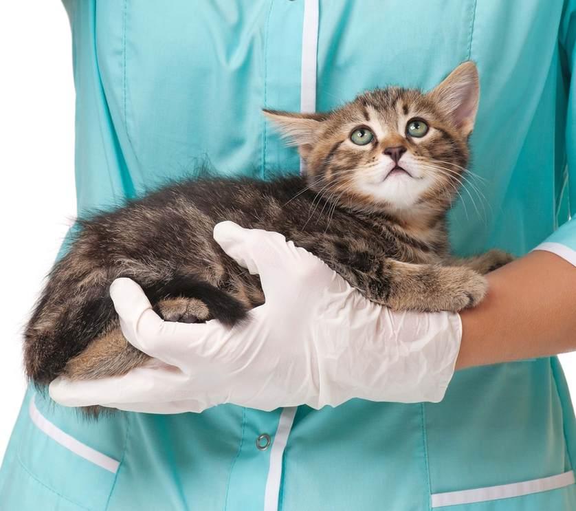 Чем лечить гноящиеся глаза у кошки