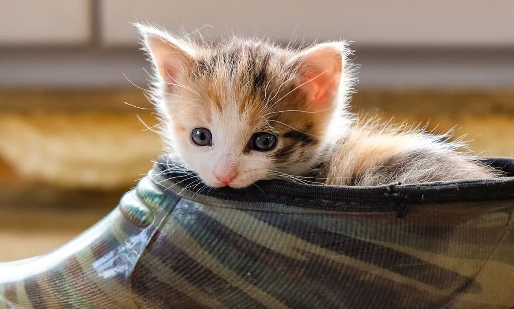 прочь непослушные котята картинки также является