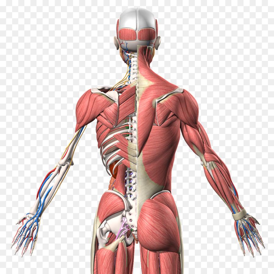 Боль в левом подреберье спины