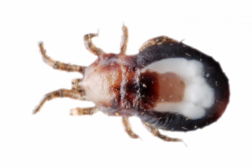 Опасное насекомое