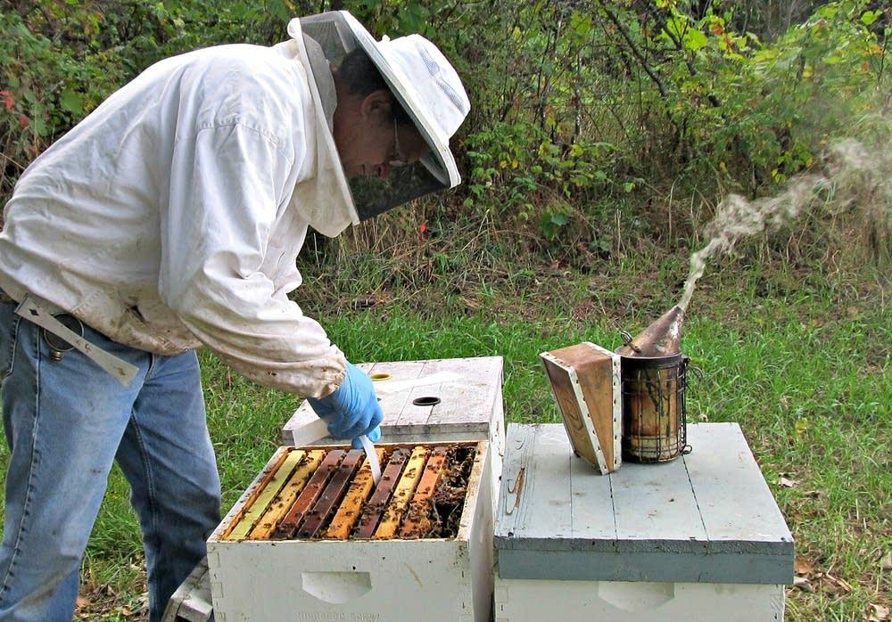 отводок пчел без матки