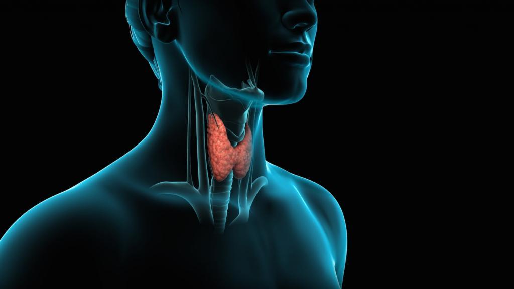 Пункция щитовидной железы под контролем УЗИ (пункционная биопсия узла)