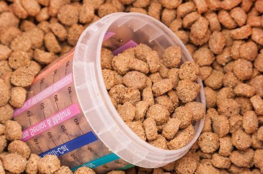 как проявляется аллергия на кошек на корм